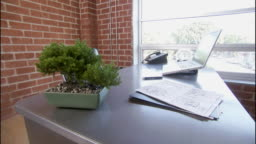 view all bonsai tree office