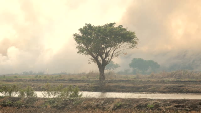 Destroyed by burning tropical forest