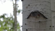 Detail of birch tree