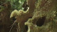 Detail of moss on tree, slider shot