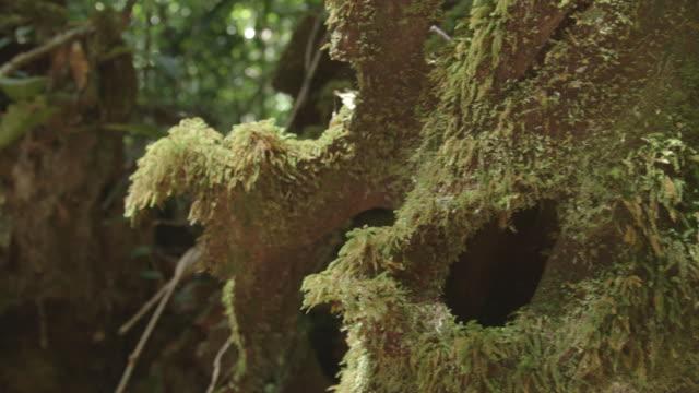 Detail of moss on tree, slider shot