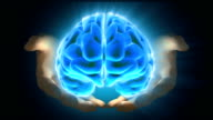 Development Brain