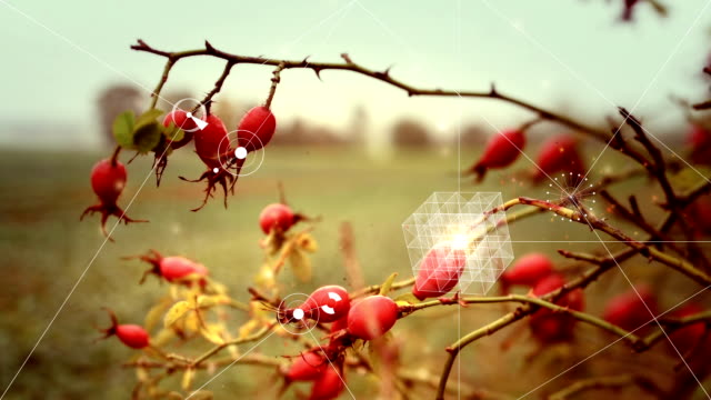 Digital abstract Nature complexity concept with rose hips