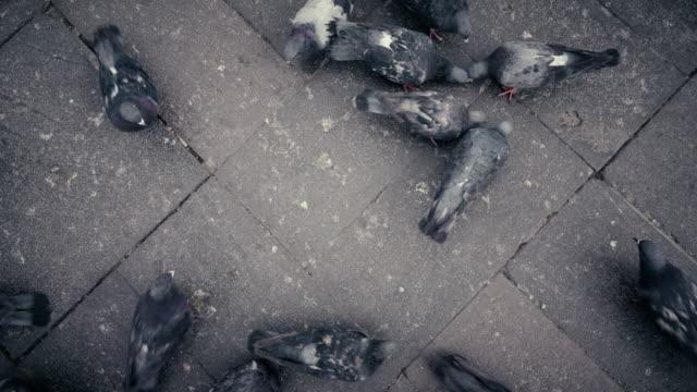 Direct boven de weergave van duiven in Arequipa Peru
