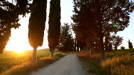 Dirt road cypress trees summer sunset countryside Tuscany Italy