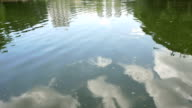 Dirty water in pond, real time.