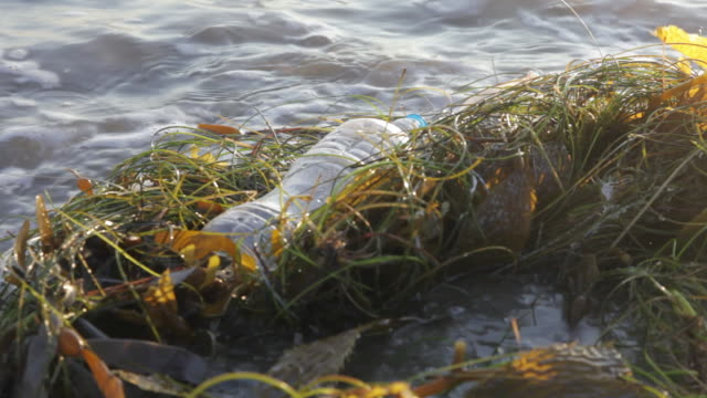 CU Discarded water bottle laying on beach in sea grass, wave approaching and moving trash / Venice Beach, Los Angeles, California, United States
