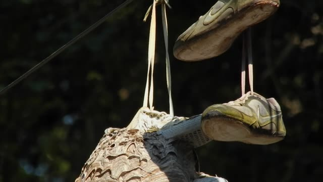 Disregarded sneakers form the base for a wasp colony to construct a nest found hanging from a wire in Fairmount Park in Philadelphia PA on September...