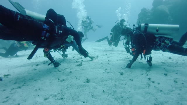 MS Divemaster pointing out sea life to divers