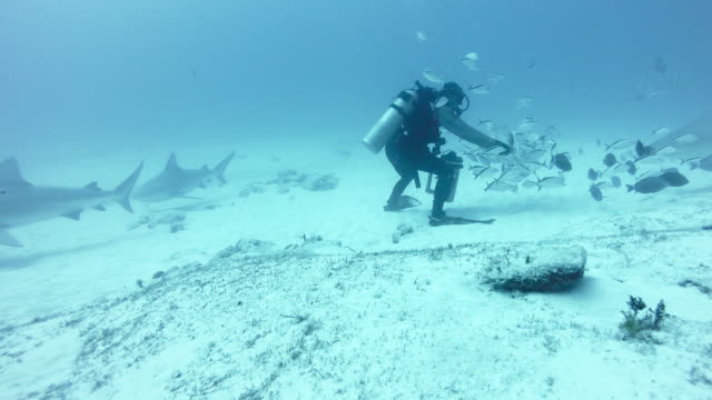 WS Diver feeding bull shark (Carcharhinus leucas)