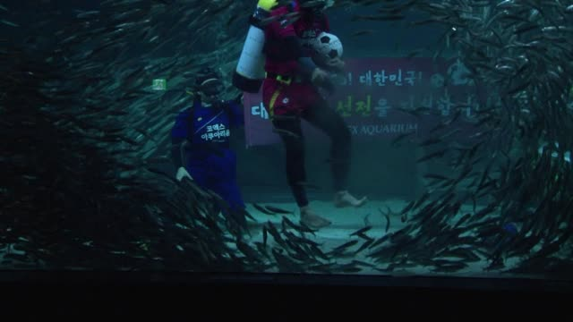 A diver plays football in a water tank with a school of sardines to mark the World Cup