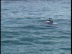 Diver surfaces bubbles emerge Trinidad and Tobago