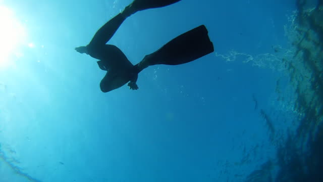 HD: Diver Swimming Back To Surface