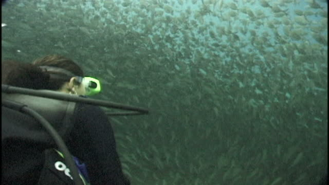 Diver swims through shoal of fish. Papua New Guinea