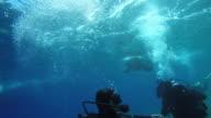 POV Diver taking a selfie underwater