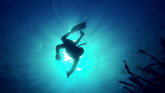 Diving down in the blue sea
