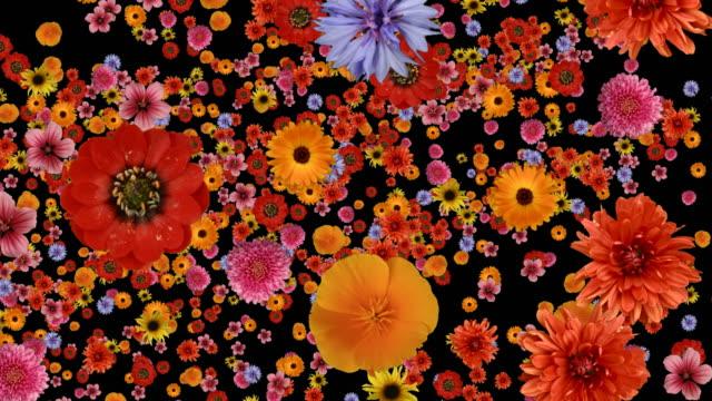 Tauchen in Blumen. Ähnliche-Filme an.
