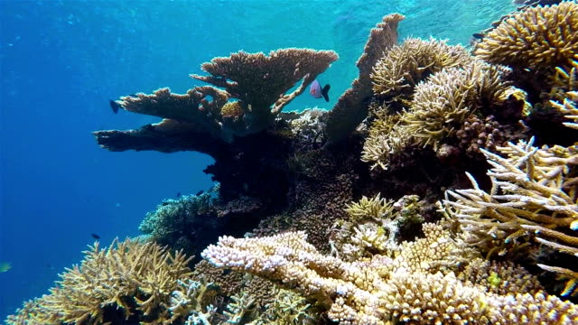 Diving ride on tropical coral reef , Maldives