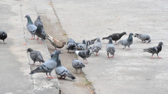 dog attack Pigeon