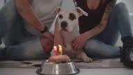 4K: Dog Birthday Party.