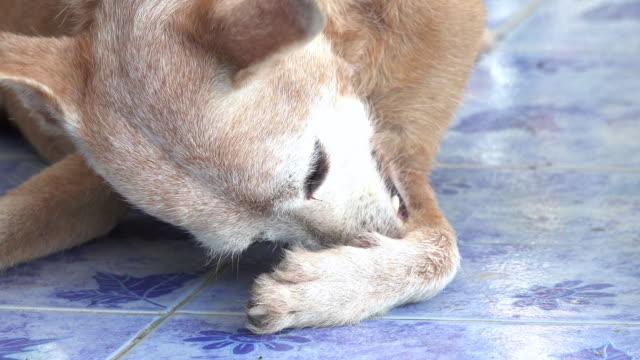 Dog biting a tick