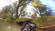 POV Dog bringing a stick from the river to it's owners