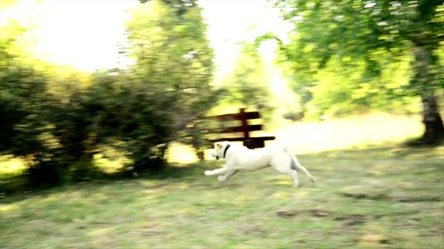 Dog chasing a stone