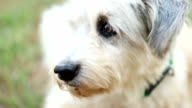 Hund Nahaufnahme des Kopfes, Slow-motion