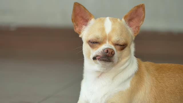 Hund Nahaufnahme sleepy