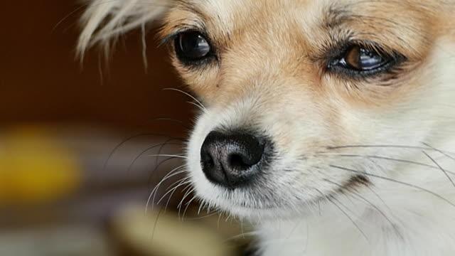 Dog close up sleepy