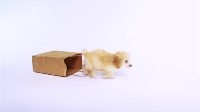 Dog dragging bag