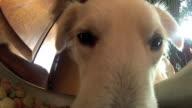 Dog eats pellets