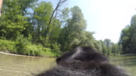 POV Dog fetching a stick thrown into the stream in sunshine