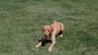 Dog fetching rope