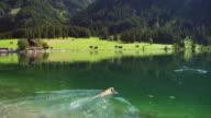 MS, PAN, Dog fetching stick in lake, Bavaria, Germany