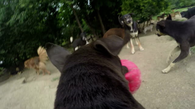 Hund Spaß mit ball in öffentlichen Pfund, das POV