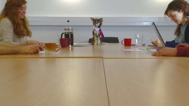 Dog in tie conducts a board room meeting with staff