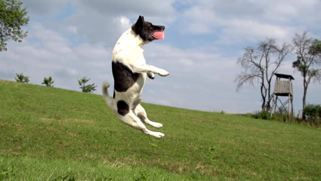 HD SUPER SLOW-MO: Dog Jumping For A Ball