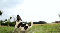 - SUPER ZEITLUPE, HD: Dog Jumping für den Ball