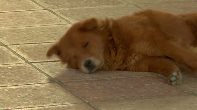 CU ZO WS Dog lying on floor in middle of large waiting room, Ecuador