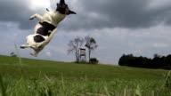- SUPER ZEITLUPE, HD: Hund keinen Ball