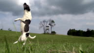 HD SUPER SLOW-MO: Dog Missing The Ball