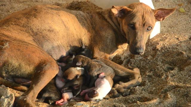Dog nursing newborn puppies