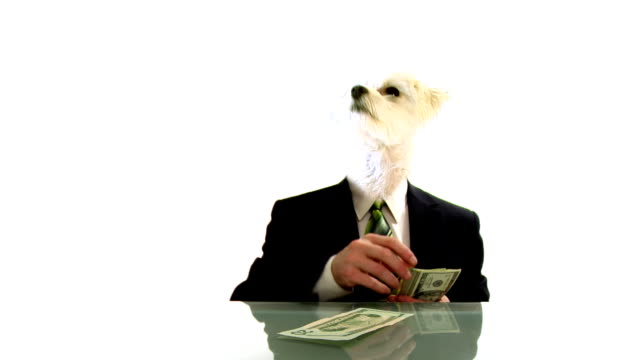 Dog People Cash Investment