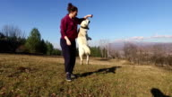 Dog playing with owner. Slow motion.