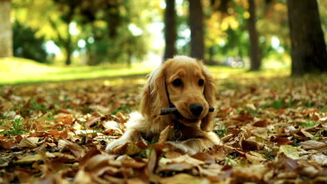 Dog playing with stick in autumn leaves