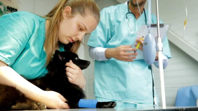 Hund som får intravenös infusion