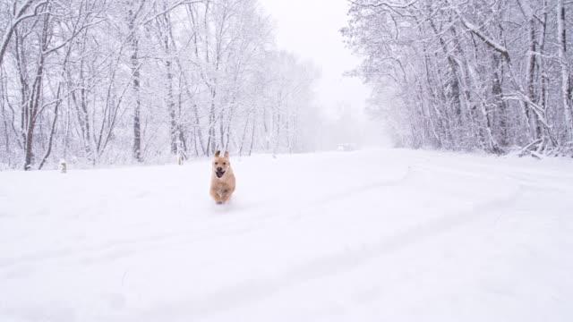SLO MO Hund läuft im Schnee