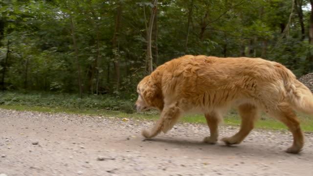 MS Dog Running On Dirt Road