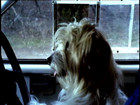 Dog sits at steering wheel driving car